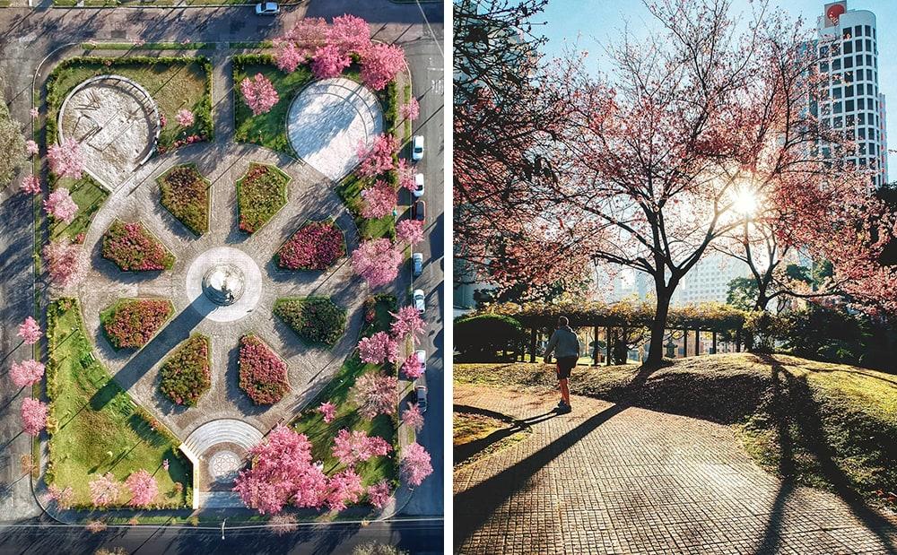 Фото: Куритиба Долина Валье-дель-Херте Не только в Японии и не только весной: где смотреть на цветение сакуры curitiba sakura
