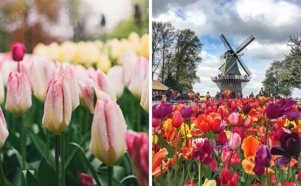 Фото: Нидерланды  Расцветающая Европа: куда поехать весной holland