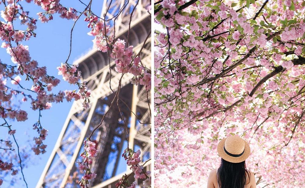 Фото: Париж Долина Валье-дель-Херте Не только в Японии и не только весной: где смотреть на цветение сакуры paris sakura 1