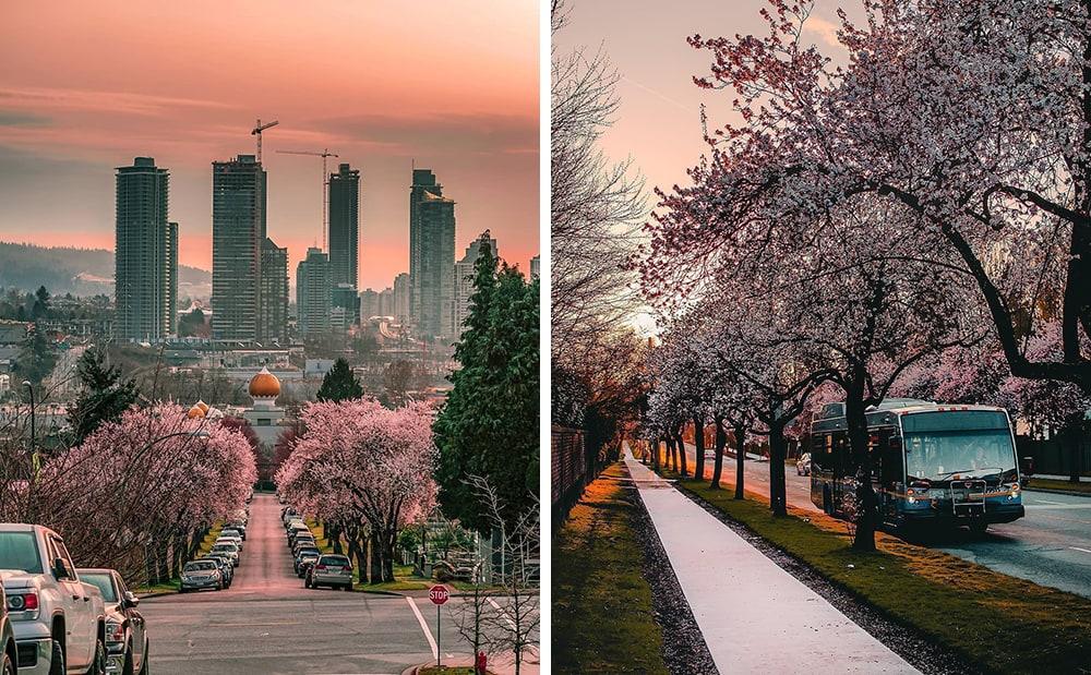 Фото: Ванкувер Долина Валье-дель-Херте Не только в Японии и не только весной: где смотреть на цветение сакуры vancouver sakura