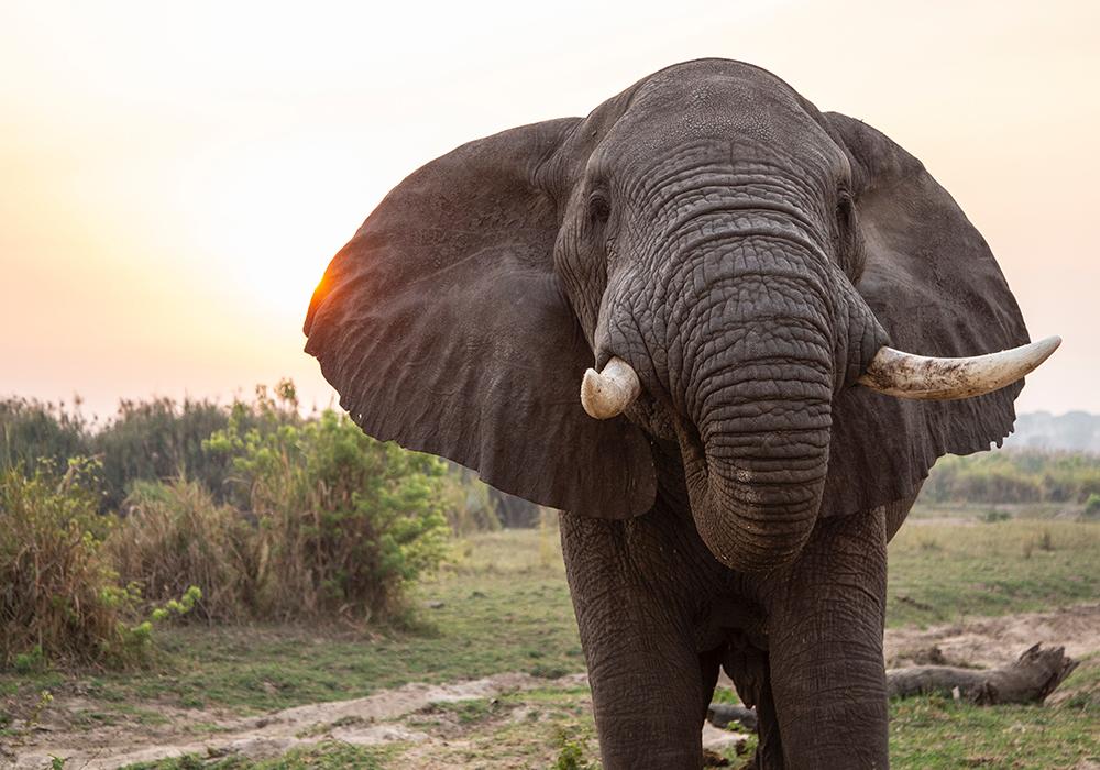 Фото: Слон