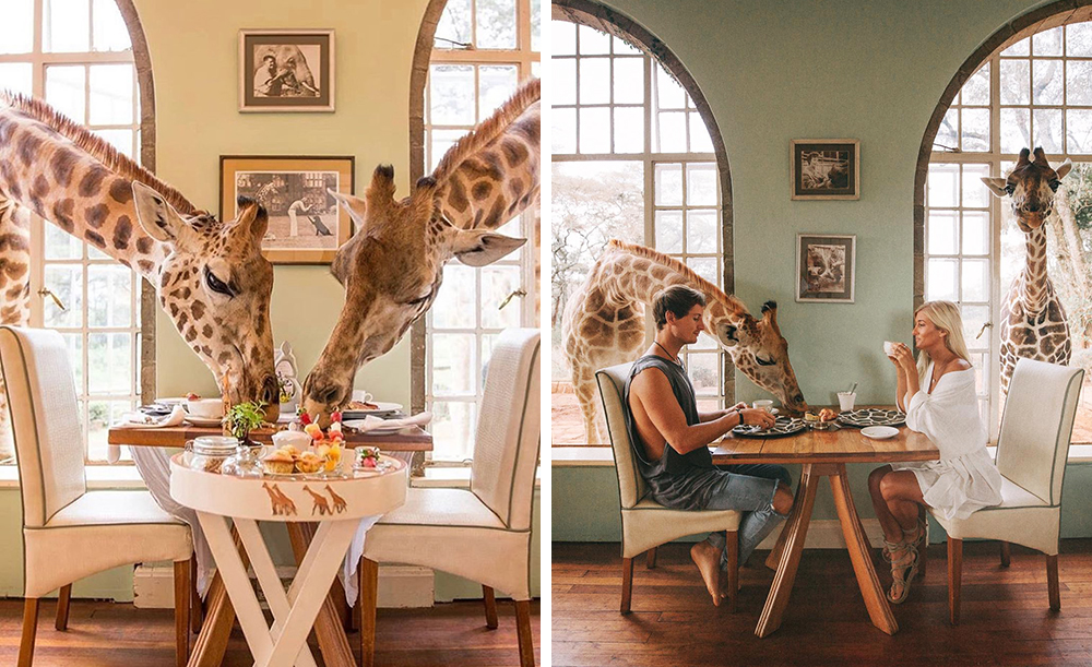 Фото: Giraffe Manor