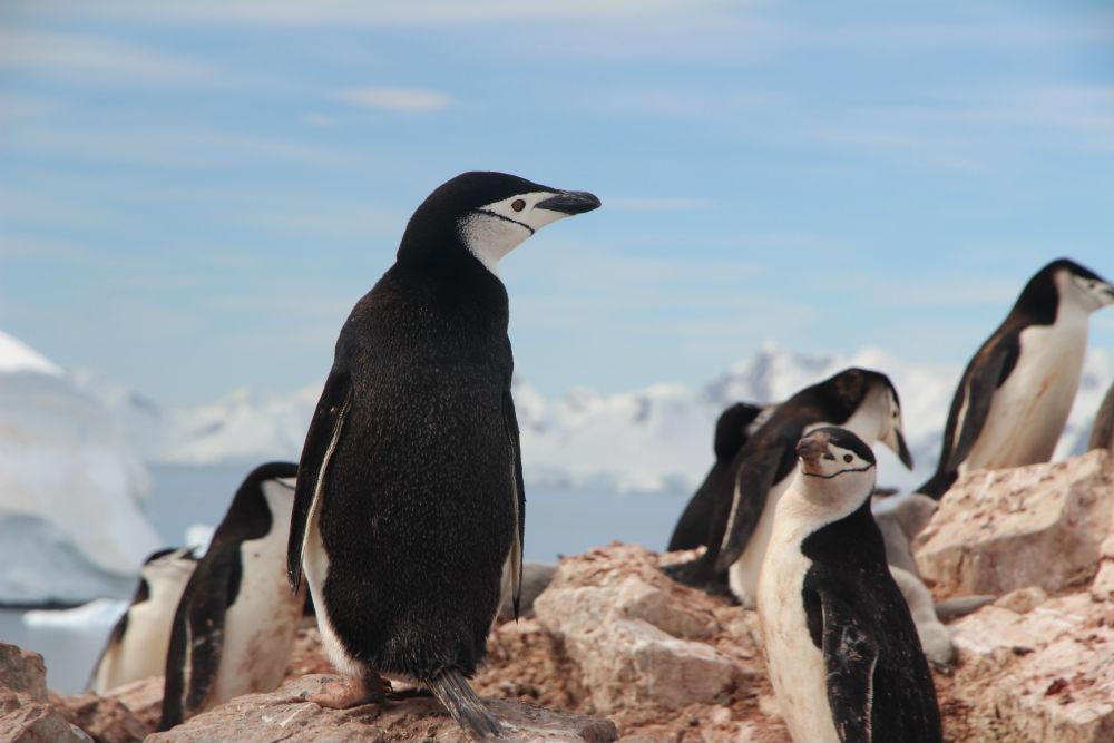 Фото: Пингвины