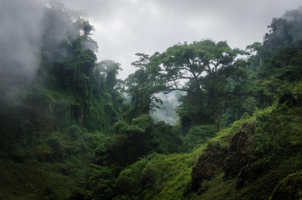 Фото: Камерун