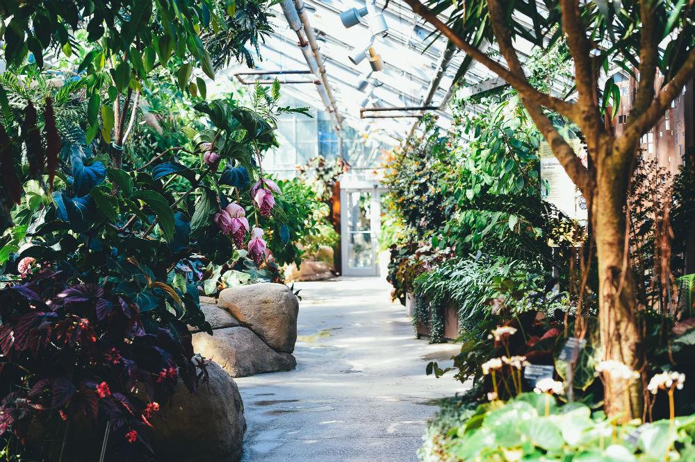 Фото: Ботанический сад Монреаля