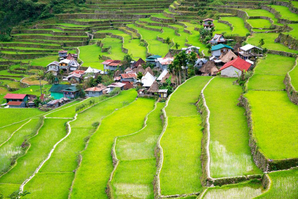 Фото: Рисовые террасы