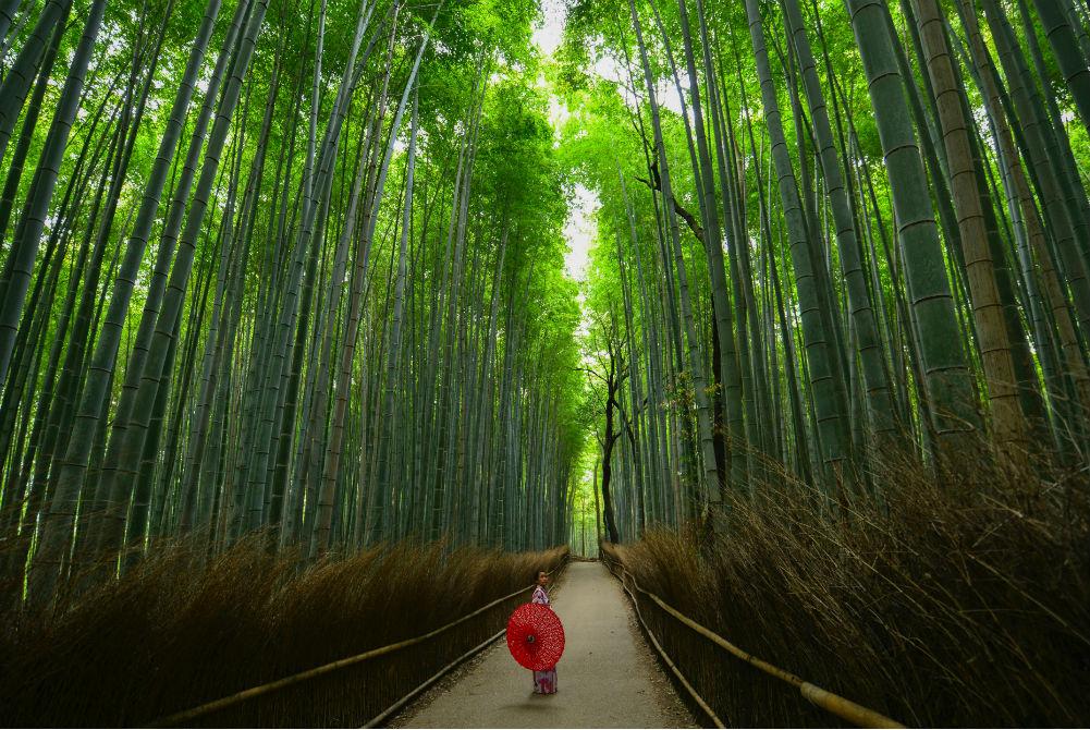 Фото: Бамбуковый лес