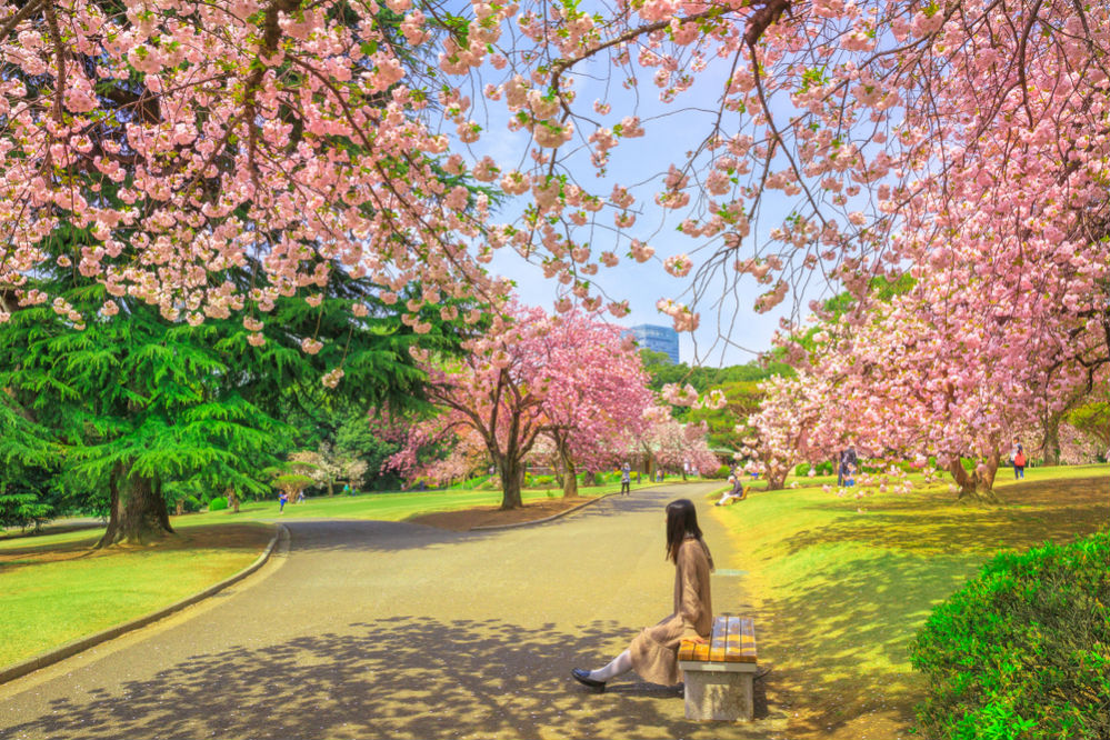 Фото: Парк Синдзюку Гёэн