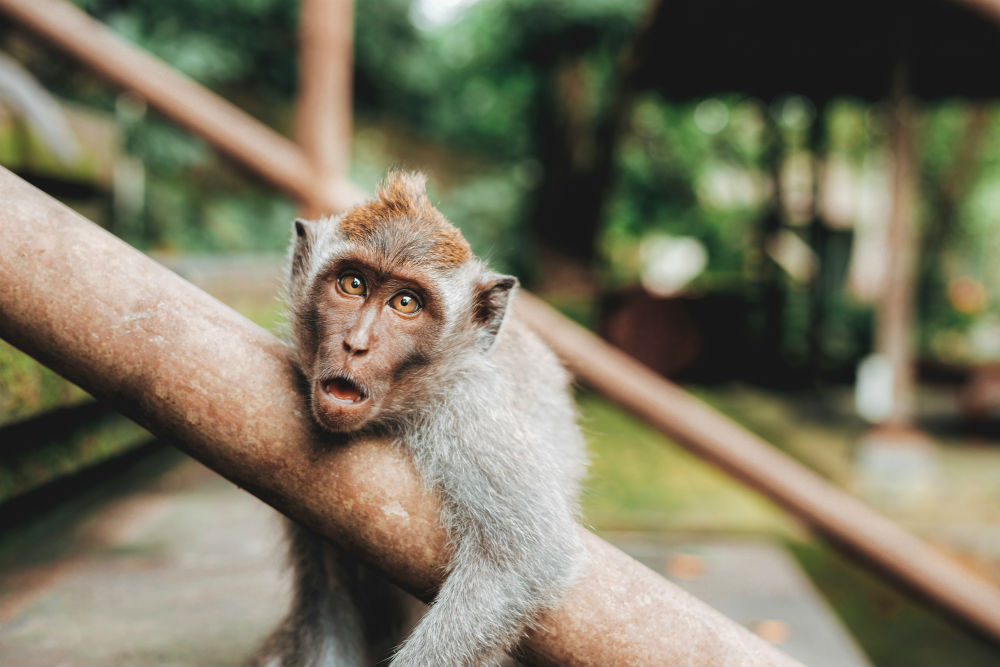 Фото: Лес обезьян