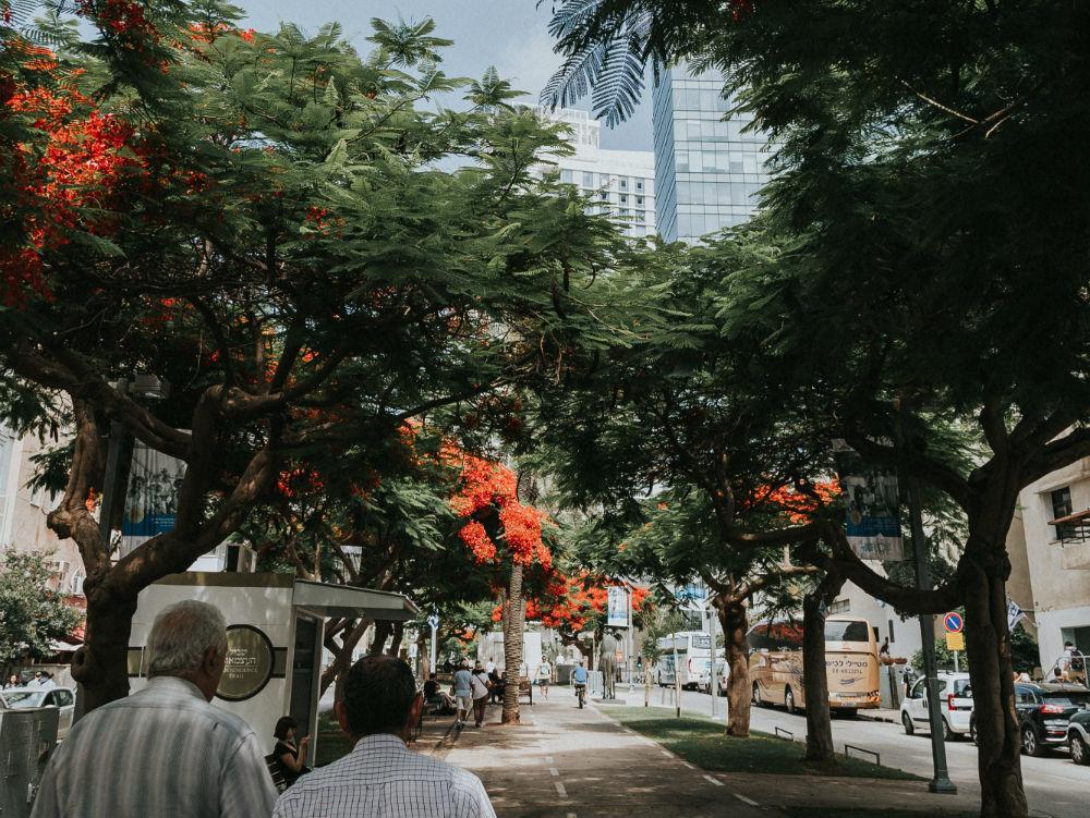 Фото: Бульвар Ротшильда