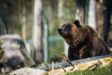 Фото: Медведь