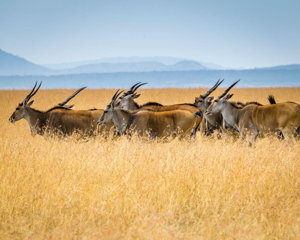 Фото: Кения